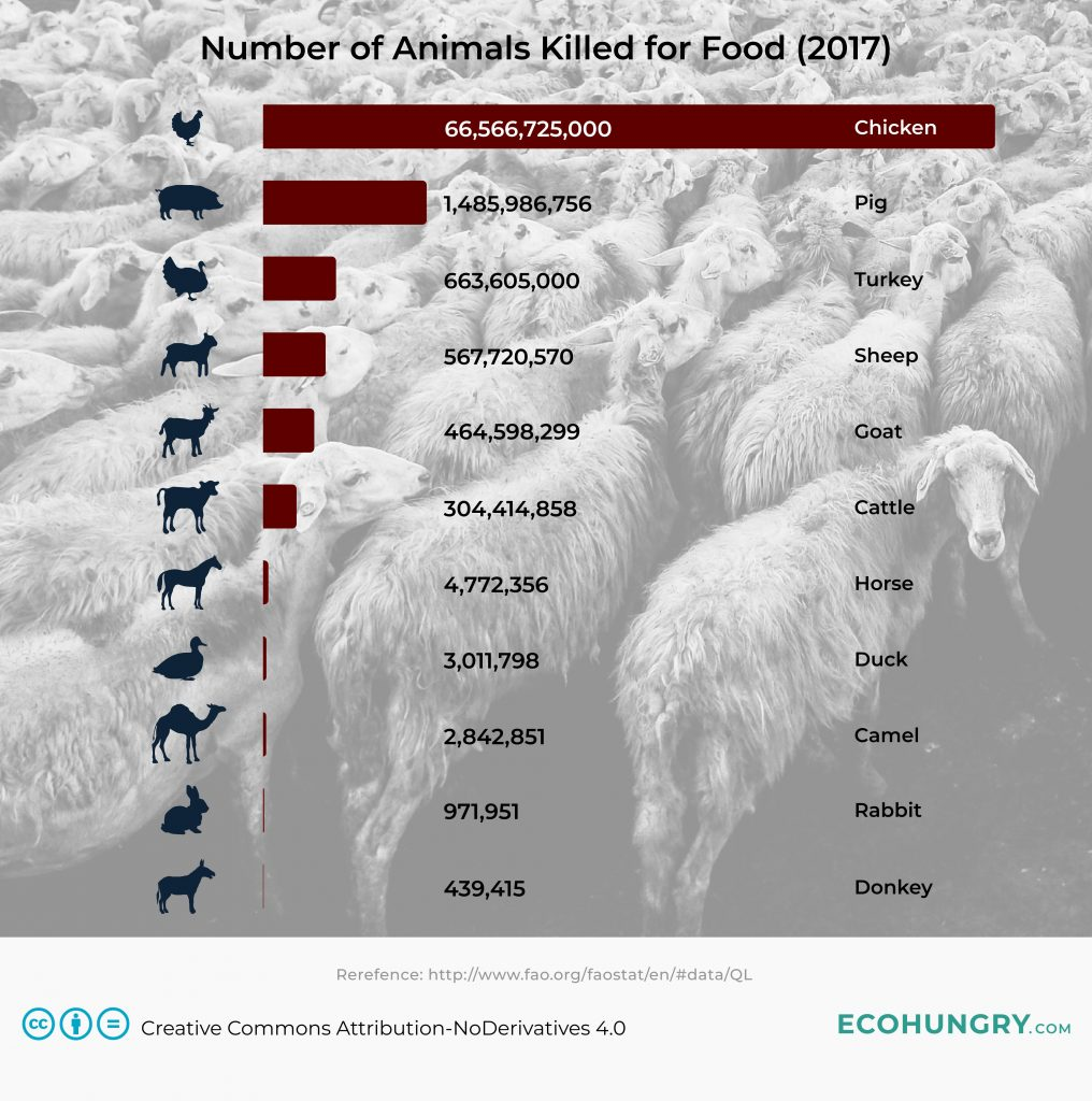 Number of Animals Killed For Food in 2017: Chicken: 66,566,725,000 Pig: 1,485,986,756 Turkey: 663,605,000 Sheep: 567,720,570 Goat: 464,598,299 Cattle: 304,414,858 Horse: 4,772,356 Duck: 3,011,798 Camel: 2,842,851 Rabbit: 971,951 Donkey: 439,415